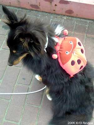 caf66326c3 Hive Blog | 犬用リュックサック