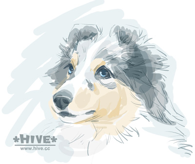 "Sheltie Illustration ""Kaito"""
