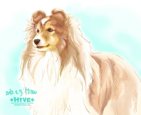 "Shetland sheepdog ""SHERRY"""