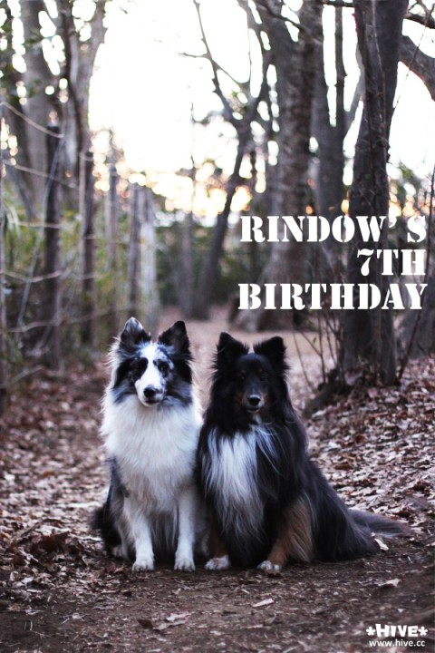 Rindow's 7th Birthday!!