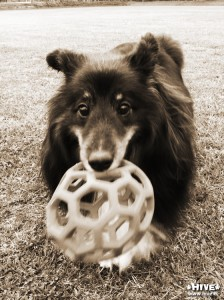 りんどうにはちょっと大きいボール