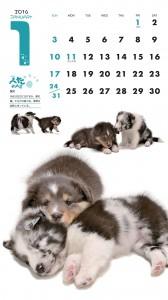ぺたわんこ 2016カレンダー